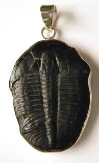 trilobite-pendant
